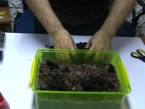 Подготовка почвы для выращивания грибов в домашних условиях