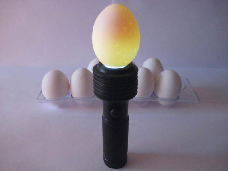 Овоскопирование гусиных яиц и виды овоскопов