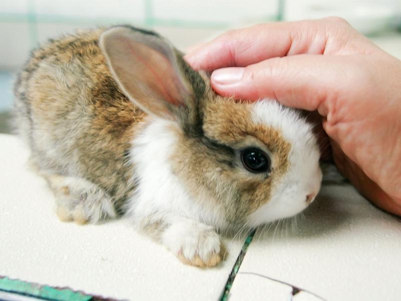 Породы кроликов и их характеристика