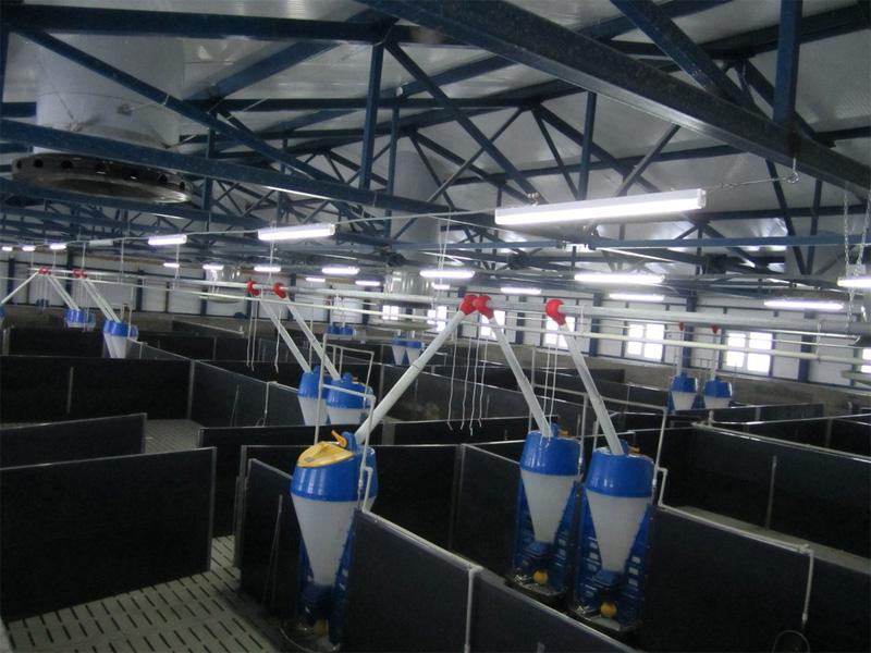 Выращивание свиней в домашних условиях, как бизнес и планирование свинарника