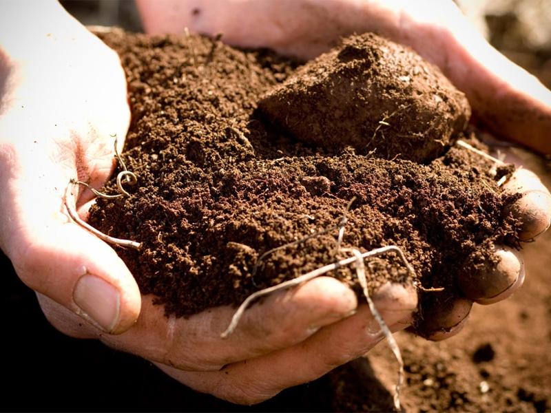 Mарганцовка как удобрение и для обработки почвы