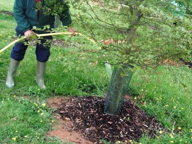 Смесь для удобрения деревьев