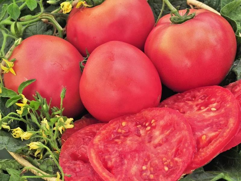 Томат розовый гигант и правила ухода за овощем