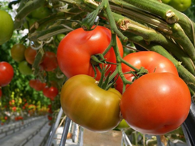 Удобрение «Растворин»: способы применения для подкормки овощей