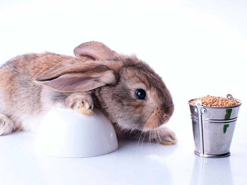 Можно ли кроликам пшеницу