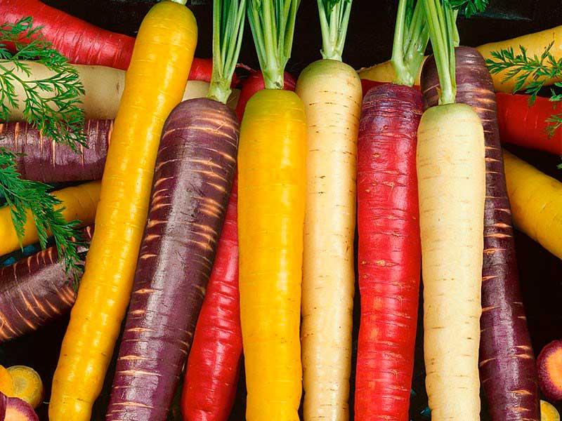 сорта моркови лучшие