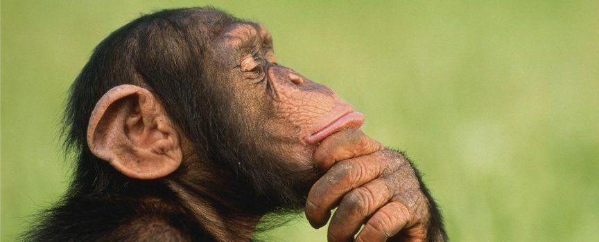 умная обезьяна