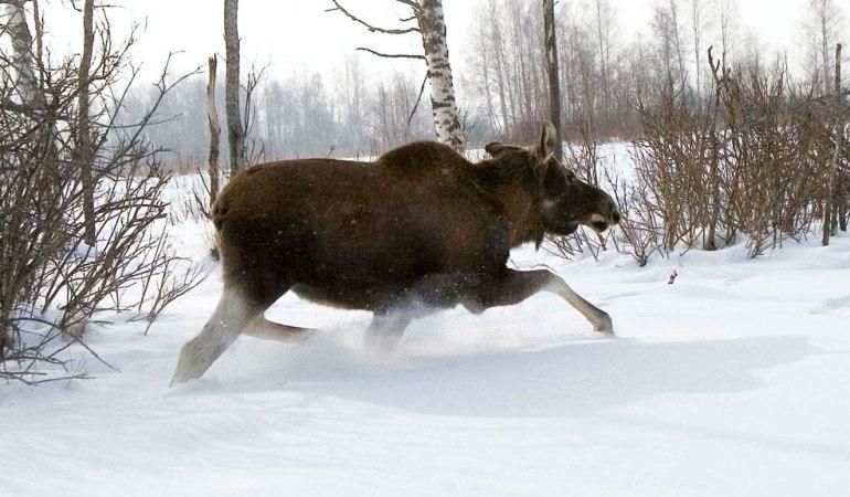 браконьерство зимой