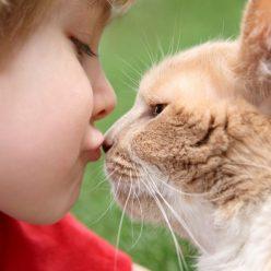 ребенок с котом польза животного