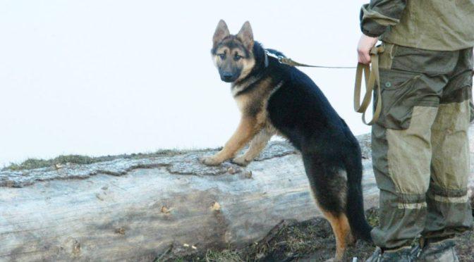 ТОП-10 пород собак для охраны