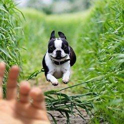 Собаки действительно способны понимать речь хозяев