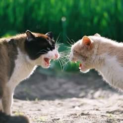 Ученые выделили 6 типов кошачьей личности