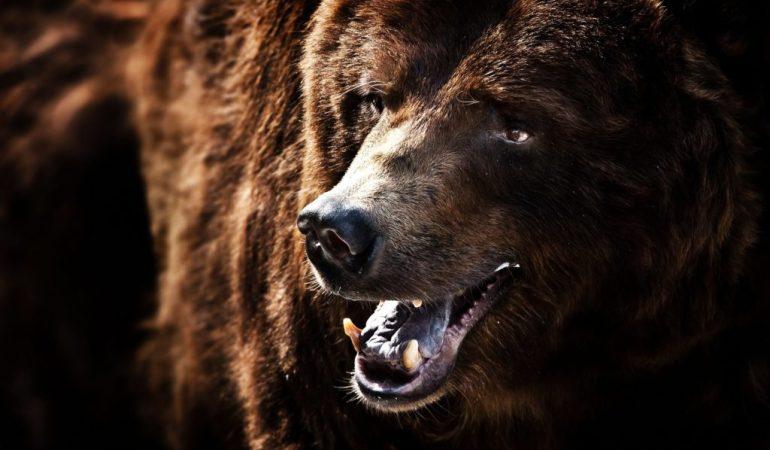 Медведь напал на человека мужчину спасли резиновые сапоги