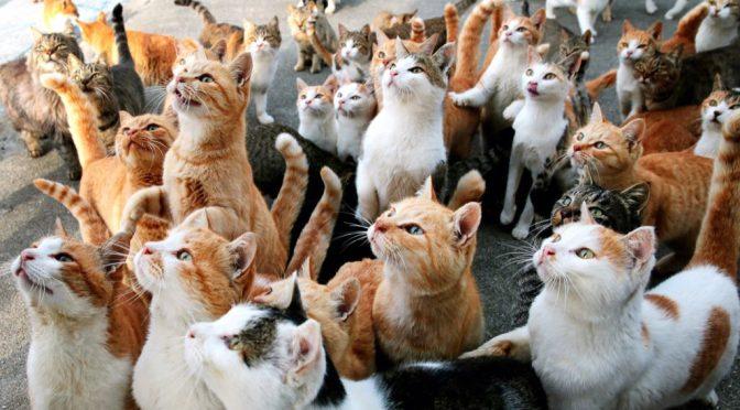 Названа самая популярная у россиян порода кошек