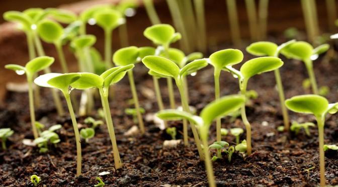 Какие семена овощей сеем в феврале на рассаду