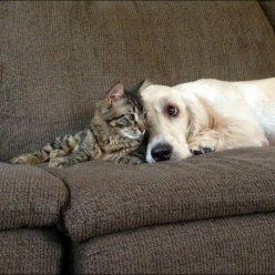 Количество кошек и собак в квартире хотят ограничить