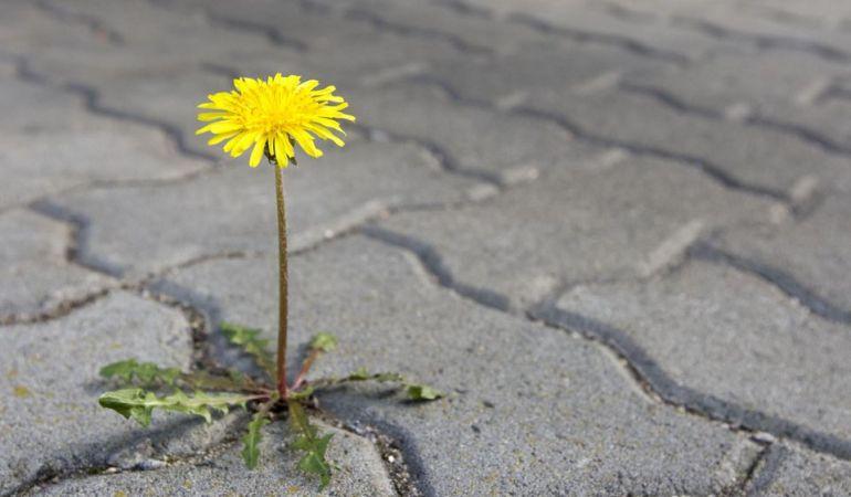 Как легко избавиться от травы на дорожках между плиток