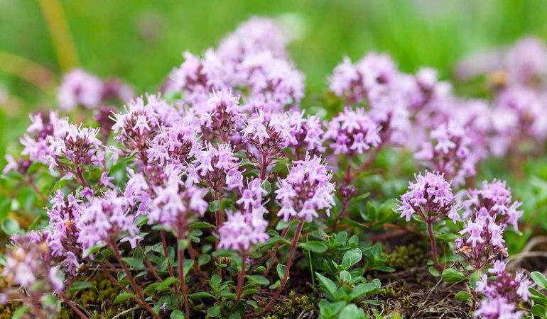 Названо растение, способное вылечить более 50 заболеваний
