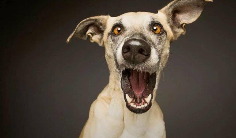 6 заблуждений о собаках, в которые до сих пор верим