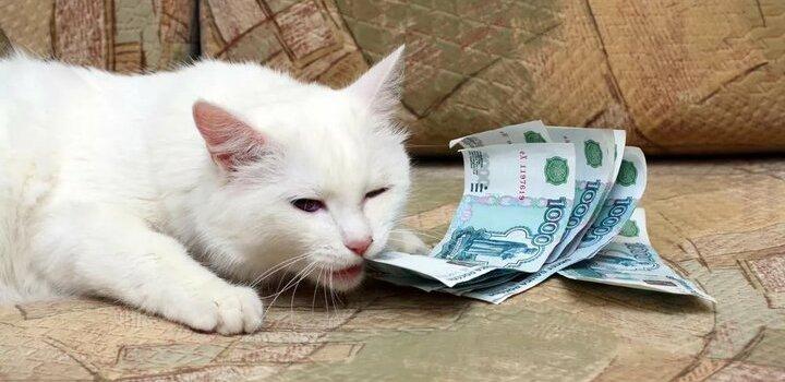 Приметы про деньги, богатство и достаток, связанные с кошками