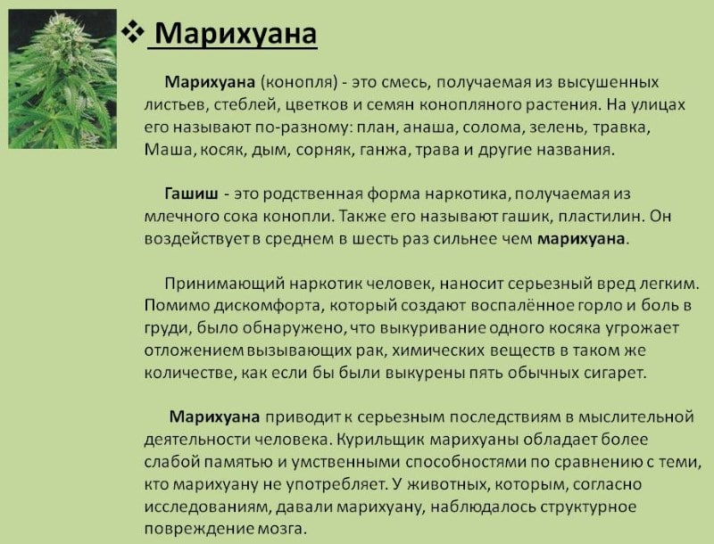 Конопля описание для детей как определяют марихуану в крови