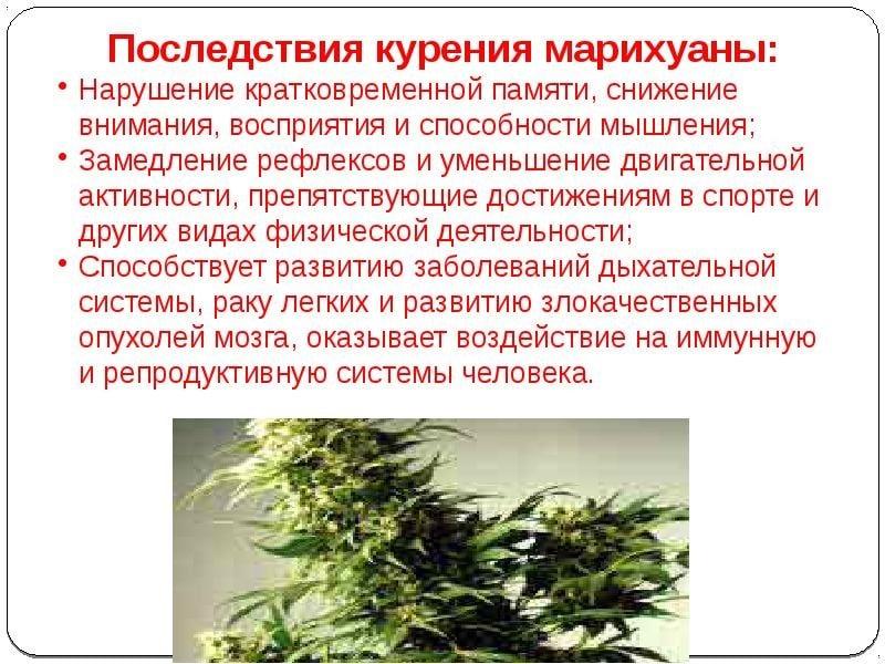 Курение конопли потенция семена марихуаны в