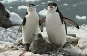 Пингвины-из-зоопарка-Нью-Йорка
