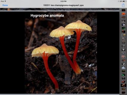 gljive 3