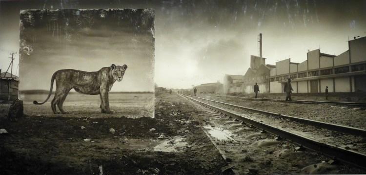Nick Brandt's Inherit the Dust exhibition at Fotografiska.