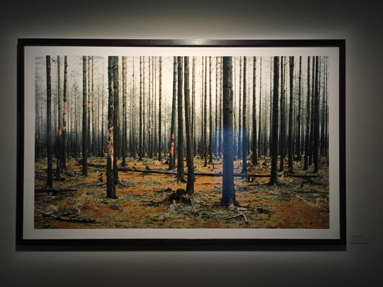 Helene Schmitz Transitions. The Forest, a series of haunting photographs from a forest that was completely devastated by a fire two years ago. Fotografiska.