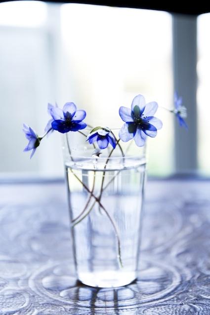 Fragile - Anemones from my garden. Ida Magntorn. V Söderqvist Blog.