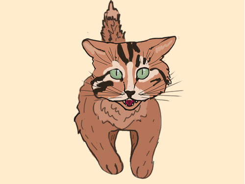 Ekspresi wajah Kucing siap menyerang