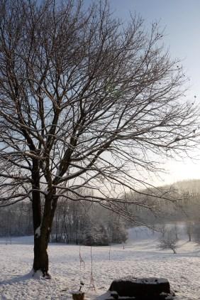 Woke up to sun shining on the Christmas snow.