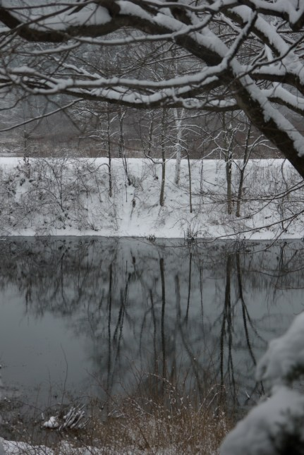 reflections of a grey day