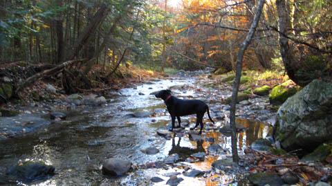 Dogs love nature walks