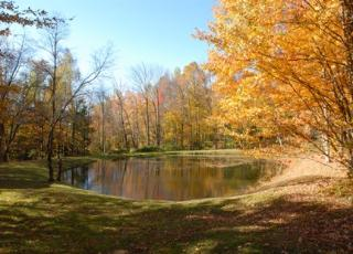 duck pond at Chimney Hill