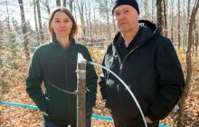 Syrup from saplings may substitute for sugarbush production
