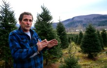In This State: The capricious business of Christmas trees suits Peter Purinton