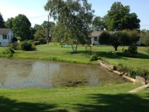 Piedmont Pond