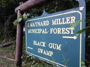 Black Gum Swamp