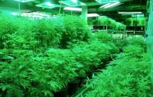 Prospects for marijuana legalization dim