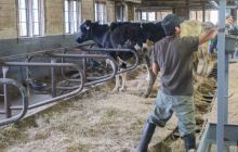 Undocumented on the farm: Inside the life of a Vermont migrant dairy worker