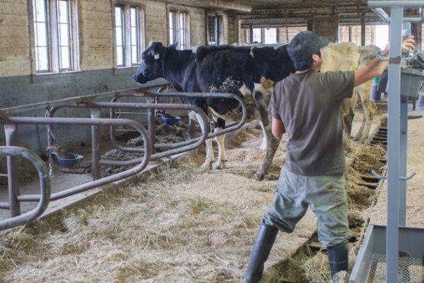 Migrant dairy worker