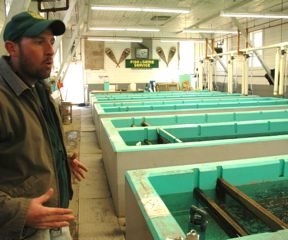 Jeremy Whalen, supervisor at the Roxbury Fish Hatchery, explains how rainbow and brook trout are reared from eggs inside the historic hatchery, built in 1891. All five of its outside rearing ponds were wiped out by tropical storm Irene, but the main building survived and is operating at a reduced level until repairs are made, hopefully by December 2013.  Photo by Andrew Nemethy