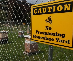 Honeybee demonstration yard on UVM campus. Photo by Audrey Clark.
