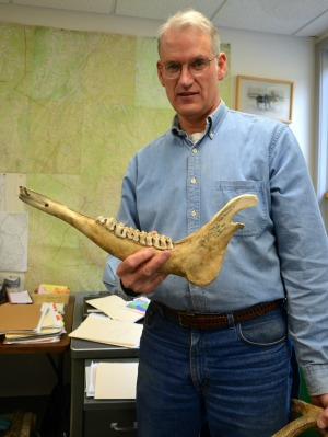 Wildlife biologist Cedric Alexander displays a moose jawbone, one of the many moose parts he has collected as the Fish & Wildlife Department's expert. Alexander's office is full of bones and antlers, as well as biopsied moose parts which he collects for scientific purposes and to show at talks around the state. Photo by Andrew Nemethy