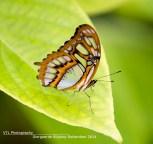 Vlinder Amazonica Diergaarde Blijdorp