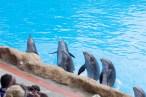 Dolphins Loro Parque