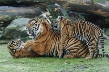vader met kids Burgers'Zoo
