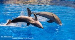 Dolfijnenshow Aqualand Costa Adeje Tenerife